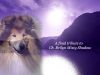 Brilyn Misty Shadow at Carostar 1 Collie