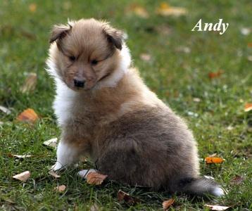 9. Andy von der Sheltieban.de 01.11.11