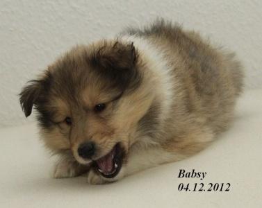 babsy von der sheltieban.de 04.12.12 - 8